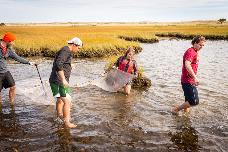 Colby-Sawyer students collecting samples in tidal estuary during Aquatic Communities field studies class