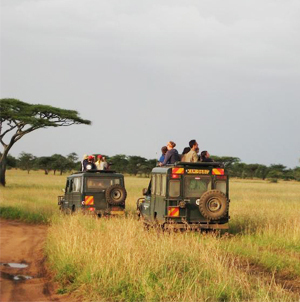 Land Rovers crossing African landscape