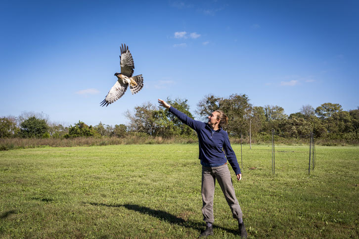 A female student releases a hawk.