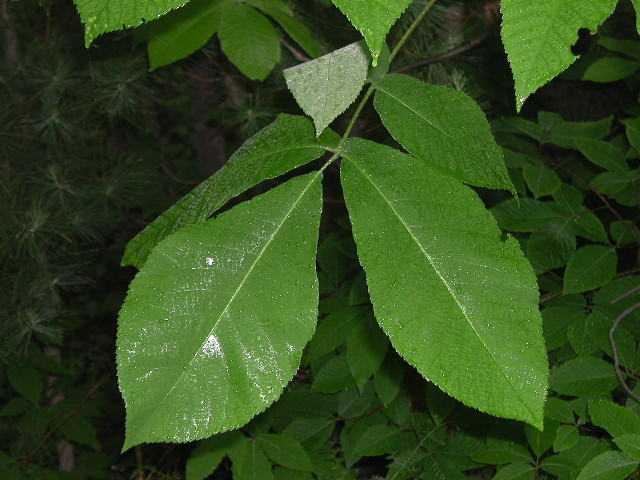 اوراق الاشجار image_1214.jpg